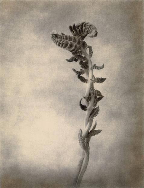 Thomas Brummett © (EEUU), 'Ferns' / Categoría: Naturaleza || Cortesía de 'Sony World Photography Awards'