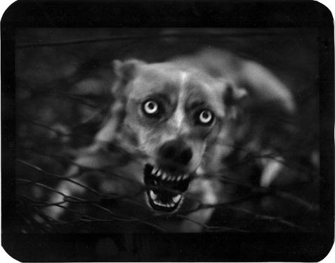 Giacomo Brunelli © (Italia), 'Untitled' / Categoría: Naturaleza || Cortesía de 'Sony World Photography Awards'