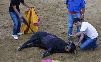 La poca destreza de los matadores de El Escorial multiplicó el sufrimiento del animal sacrificado el pasado 3 de agosto.
