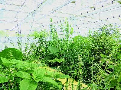 Una de las estaciones vegetales depuradoras de aguas residuales de Veolia en Francia.