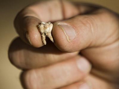 Uno de los dientes hallados en la cueva de Qesem (Israel).AP