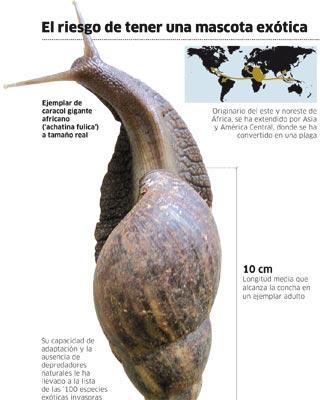 El caracol gigante se come andaluc a forocoches for Caracol de jardin que come