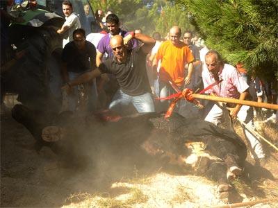 El último torneo del Toro de la Vega en Tordesillas (Valladolid).-EFE