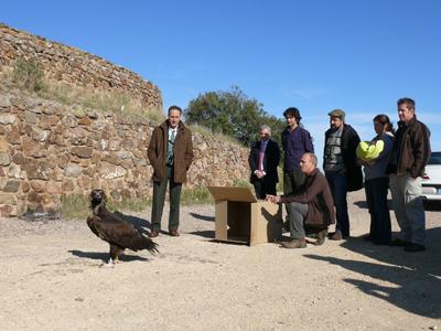 Personal del centro de Sevilleja de la Jara libera un buitre negro, el 8 de diciembre.