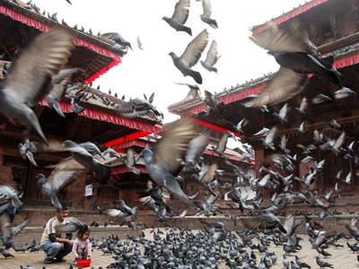 Una niña da de comer a un numeroso grupo de palomas.-