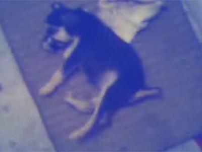 Captura del vídeo en el que un hombre maltrata a un cachorro.