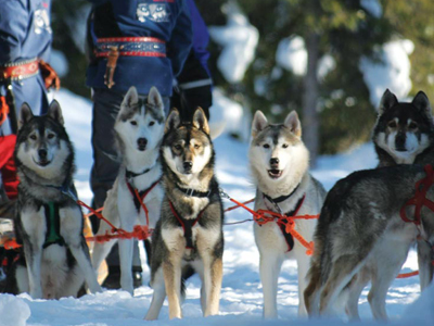 Casi un centenar de perros fueron ejecutados en Canadá.