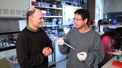 Los investigadores Juan Carlos Izpisúa y Guang-Hui Liu, primer y último autor del trabajo de Nature'.