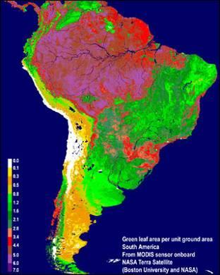 La NASA constata la sequía récord que sufrió el Amazonas en 2010