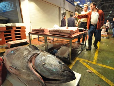El consumo de atún está detrás de buena parte del mercurio que se encuentra en el organismo de los seres humanos. afp