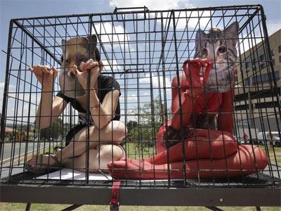 Grupos animalistas defienden la eliminación del comercio con animales.