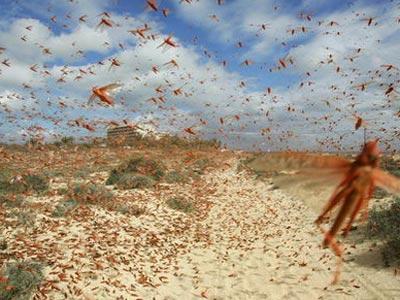 Una plaga de langostas flotando en el aire. EFE