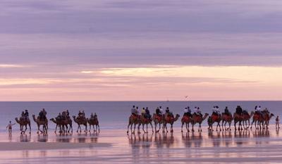 Un grupo de turistas disfruta a lomos de los dromedarios en una playa de la costa occidental australiana. -