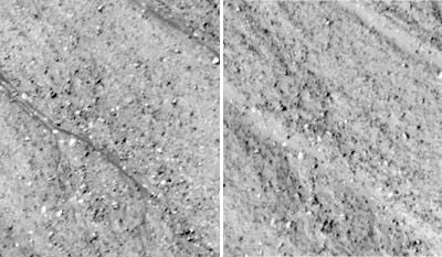 La imagen de la derecha muestra como la línea desaparece a los pocos meses. science