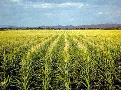 Una plantación en Argentina. CLARÍN