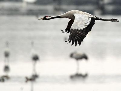 Las aves migratorias tratan de adaptarse a las nuevas temperaturas. afp