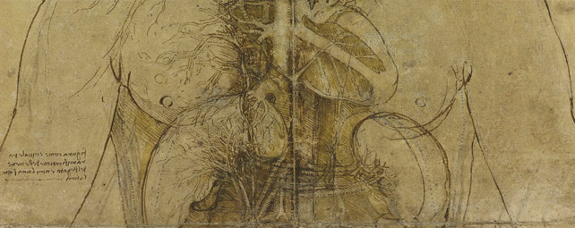 Una de las ilustraciones de Da Vinci.-THE ROYAL COLLECTION