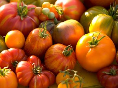 Una investigación en la que ha participado el CSIC ha completado la secuenciación del genoma del tomate y la de su pariente silvestre.