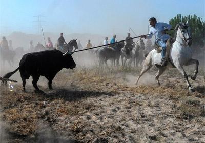 El toro Volante, siendo lanceado.- PACMA