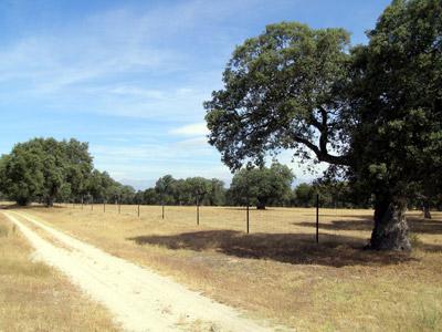 Al menos 40.038 hectáreas serán susceptibles de venta en Castilla-La Mancha.