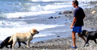 El PSOE denunciará a Aznar por pasear en Marbella con sus perros sueltos y sin bozal