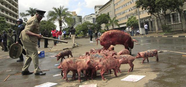Los antidisturbios kenianos tratan de controlar a los cerdos.