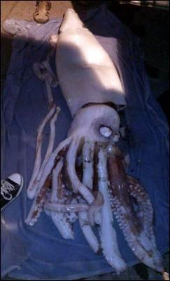 Imagen del calamar gigante. EFE