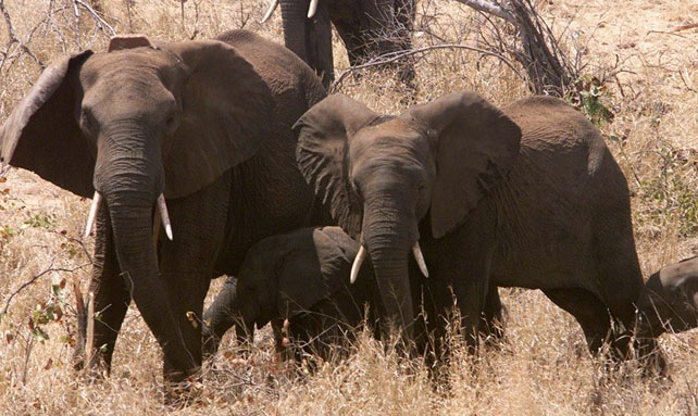 Zimbaue tiene una de las reservas mayores de paquidermos del mundo.