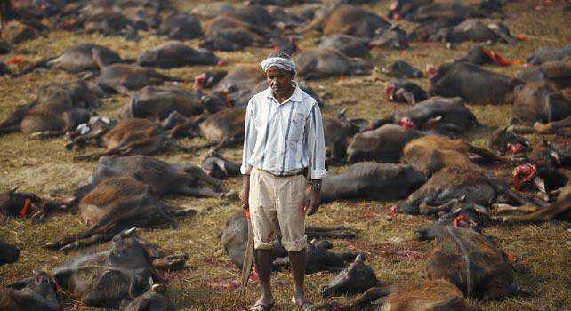 Un hombre sostiene un machete rodeado de centenares de animales brutalmente mutilados