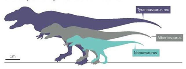Hallan en el Ártico un diminuto dinosaurio primo del T - Rex 1394703357337dinos-galc4