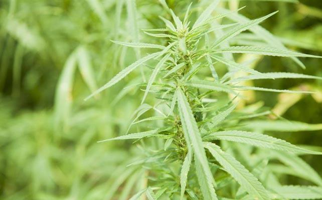 """La ONU plantea por primera vez la """"despenalización"""" de la droga"""