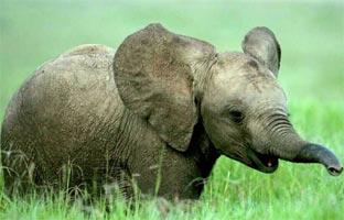 Los 10 animales en peligro de extinción, según la WWF